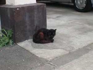猫ひろしが何だっていうのさ
