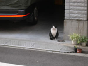 ogawamachi-3.jpg