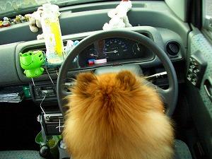 運転ならまかせろ。