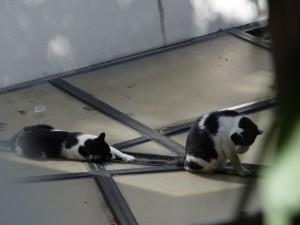 屋根の上のねこ