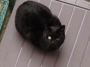 ウィンク猫