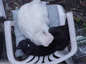 黒猫はまくら