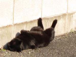 やわらかい黒猫
