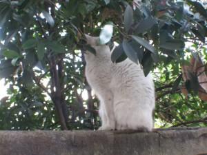 白猫のうしろあたま