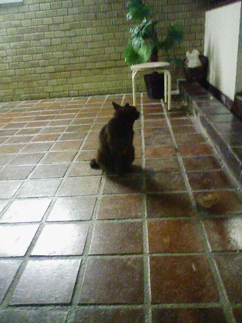 柔らか黒猫